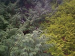 Image of green nature